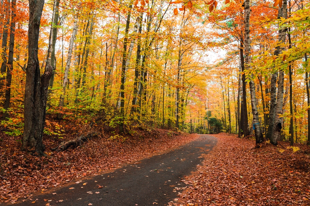 Go Hiking for some stunning Adirondacks Fall Foliage near our Upstate New York hotel